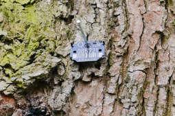 Arbotagi, czyli karty zdrowia krakowskich drzew