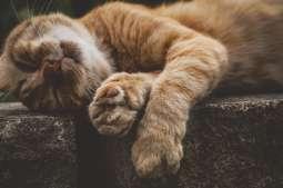 Kraków ma prawie 2,5 tys. wolno żyjących kotów