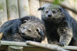Obce, a niedługo swojskie – nowe ssaki w krakowskim zoo