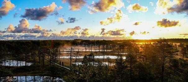 Park Narodowy Lahemaa w Estonii - malowniczy zachód słońca nad lasem i moczarami