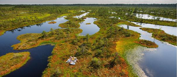 Wyspy Estonii - malowniczy widok z góry na zielony obszar wyspy pokryty jeziorami i moczarami
