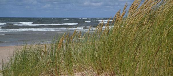 Türisalu klint - klifowe wybrzeże Estonii - widok na wydmową plażę z trawami